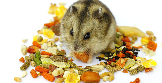 Best Hamster Food - Guide
