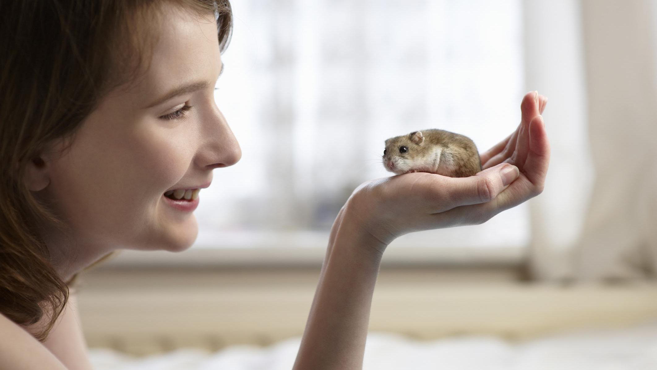 How to train a hamster - Welcome Home New Hamster - How to find if Hamster is Lost
