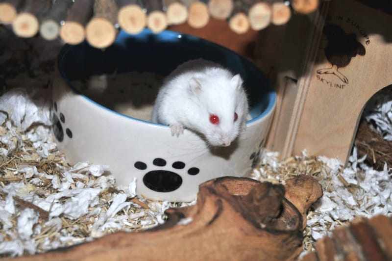 The myths and truths about hamster