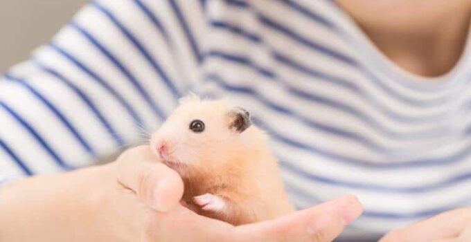 How to stop a hamster from biting?